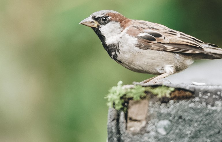 Free Devotions - Christian Resources - Sparrow