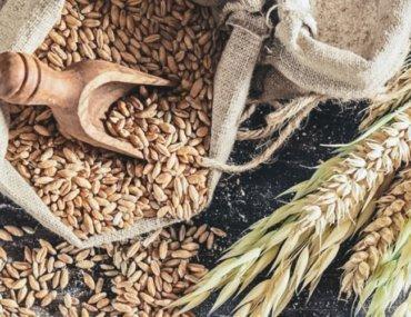 Free Devotions - Christian Resources - Grain