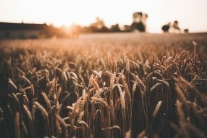 Free Devotions - Online Ministry - Lord of Harvest