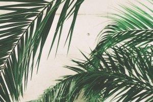 Free Devotions - Online Ministry - Palm Sunday Hosanna
