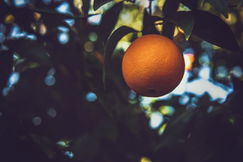 How to be a Fruitful Christian | Christian Nonprofit | 13forty4